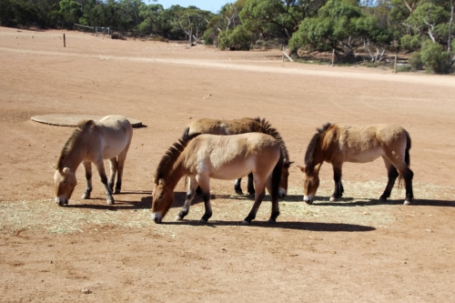 A-Monarto Zoo (5)
