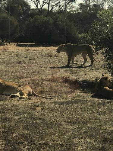 B-Monarto Zoo (3)